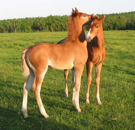 Horse Games for Mac Download Horse Games For Free and Have